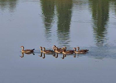 Carp Fishing Lake, Kent